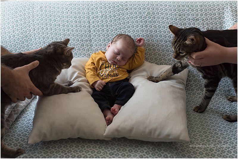 photo nouveau-né avec des chats
